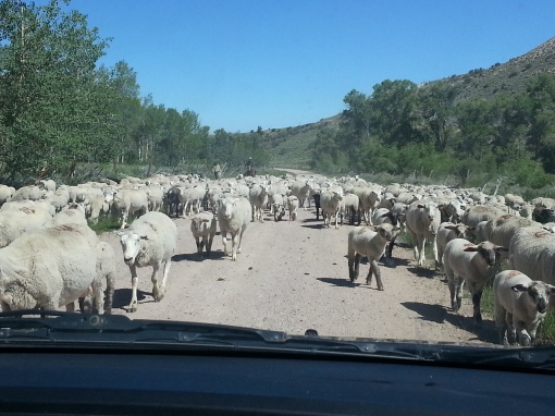 We did run into some traffic on the way home.